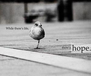 hope, life, and bird image