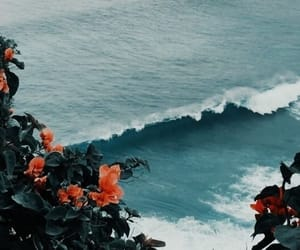 flowers, wallpaper, and ocean image