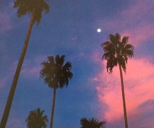 aesthetic, sunset, and palm trees image