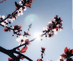 cherry blossom and wp image