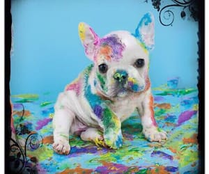 colorful, puppy, and colors image