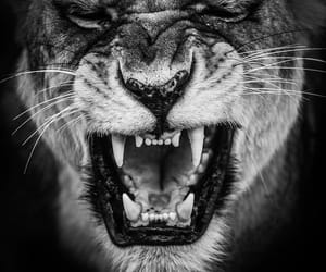 anger, angry, and animals image