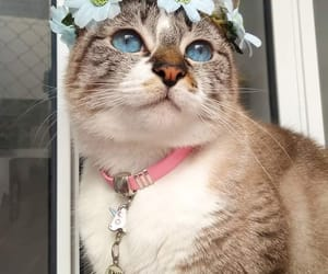 lovely, beautiful, and cat image