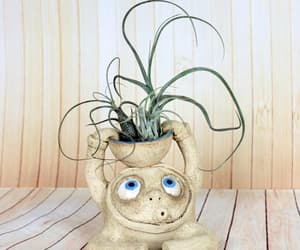 air plant, Ceramic, and fox image