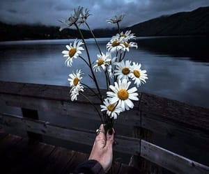 flowers, daisy, and dark image