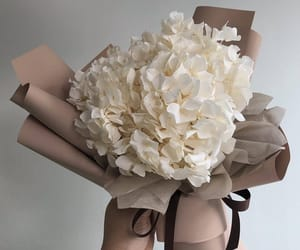 flowers, soft, and white image
