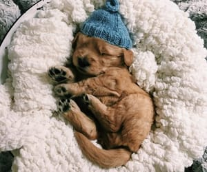 fashion, outfits, and puppy image