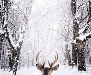 animal, snow, and invierno image