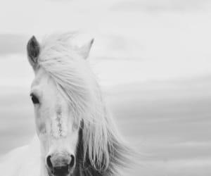 beach, dark, and horse image