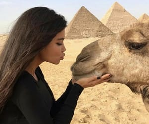 animal, egypt, and cute image