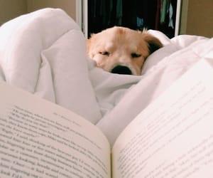 dog, book, and animal image