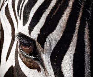 animals, black and white, and eye image