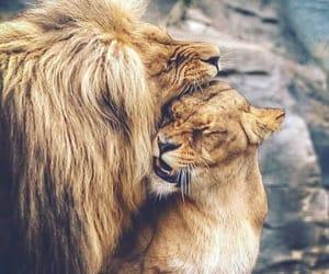 lion, animal, and couple image