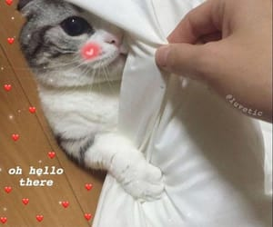 adorable, cat, and hearts image