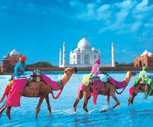 india, camel, and travel image