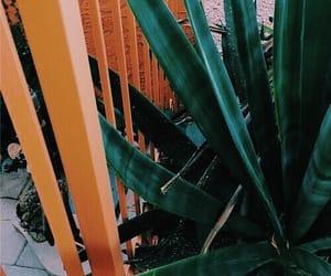 orange, green, and plants image