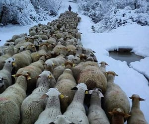 Animales, invierno, and naturaleza image