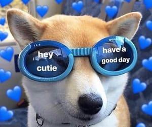 blue and dog image