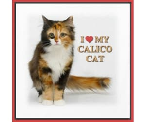 calico, cat, and tees image