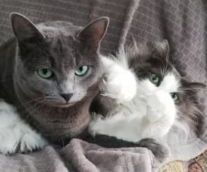 cat, fight, and grey image