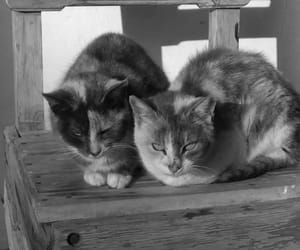 animals, black, and black and white image