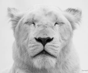 be their voice, lions are not trophys, and save all animals now image