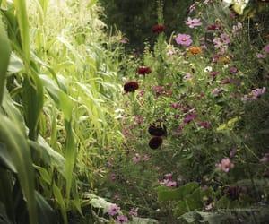 cornfield, gardening, and farming image