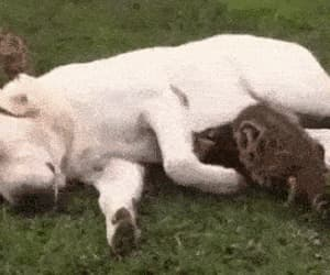 awesome, funny, and cuddle image