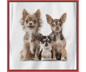 chihuahuas, dog, and dogs image