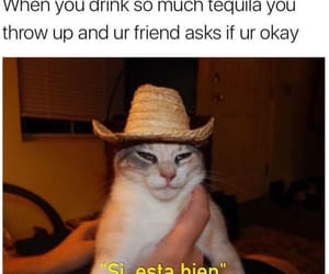 funny, tequila, and friends image