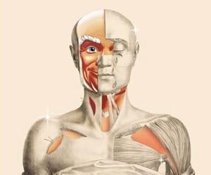 anatomy, Collage, and retro image
