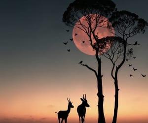 africa, animals, and sunset image