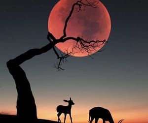 africa, animals, and shadow image