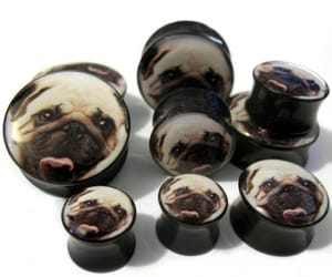 Plugs, pugs, and stretched ears image
