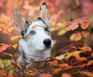 branches, autumn leaves, and malamute image