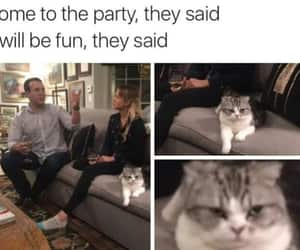boring, cat, and funny image