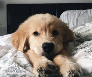 animal, dog, and pet image