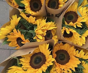 flowers, moodboard, and tournesols image