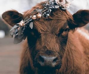 animal, cow, and flowers image