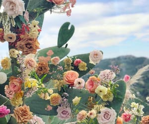 cactus, colors, and flowers image