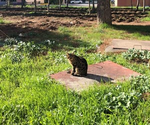 cat, green, and grass image