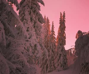 pink, snow, and trees image