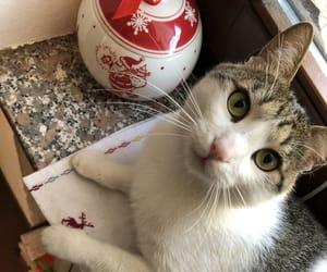 gatto, kitties, and xmas image