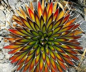 colorful, succulent, and close-up photography image