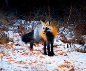 canada, woods, and wildlife photography image