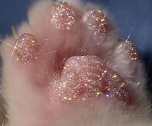 cat hand, pink, and tumblr image