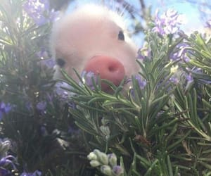 baby animals, lovely, and pig image