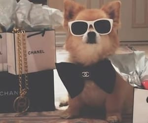 adorable, bling, and chanel image