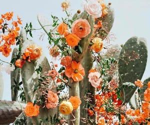 flowers, cactus, and orange image