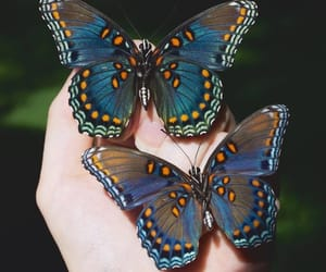 nature, blue, and butterfly image